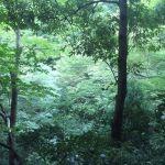高尾山3号路風景