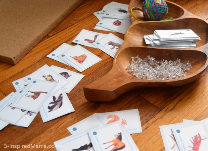 Sorting Cards for a Hands on Food Web Board - Science for Kids at B-Inspired Mama