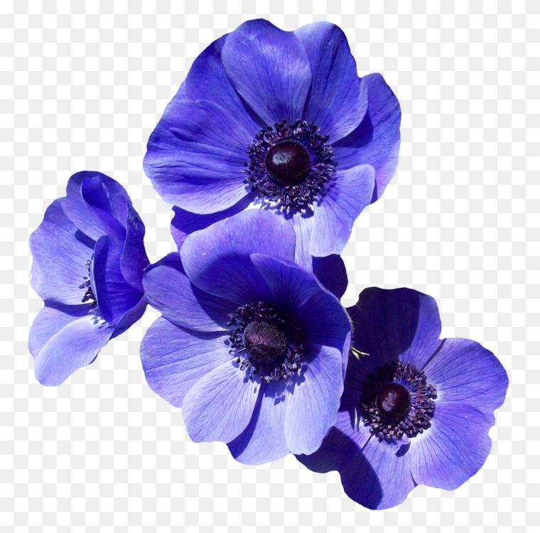Flower bouquet Purple Blue rose CC0 - Blue,Plant,Flower CC0 Free