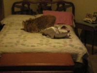 Dog Humps Pillow on Vimeo