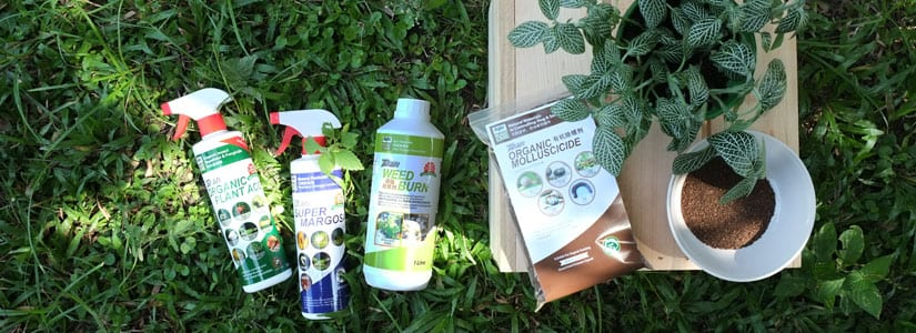 Organic Insect Repellents Baba Gardening