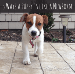 5 Ways a Puppy is Like a Newborn