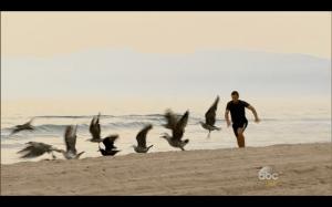 JP birds