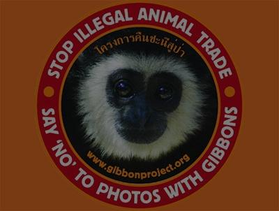 The Gibbon Rehabilitation Project – Protecting Thailand's Gibbons