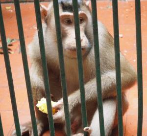ラグナン動物園の猿③