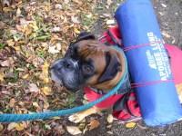 MYOG Summer/Autumn Backpacking Dog bed - Backpacking Light