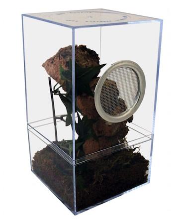 gooty sapphire tarantula terrarium