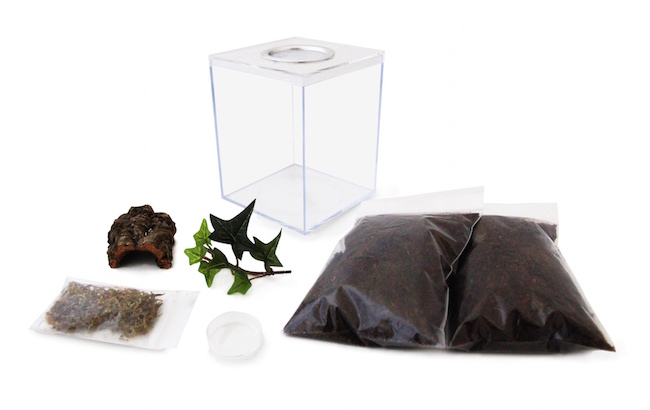 terrestrial tarantula terrarium