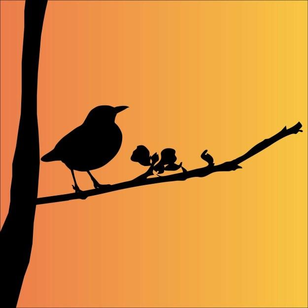 blackbird-163503_1280