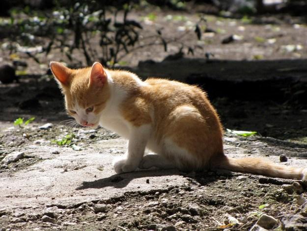kitten-873392_1280