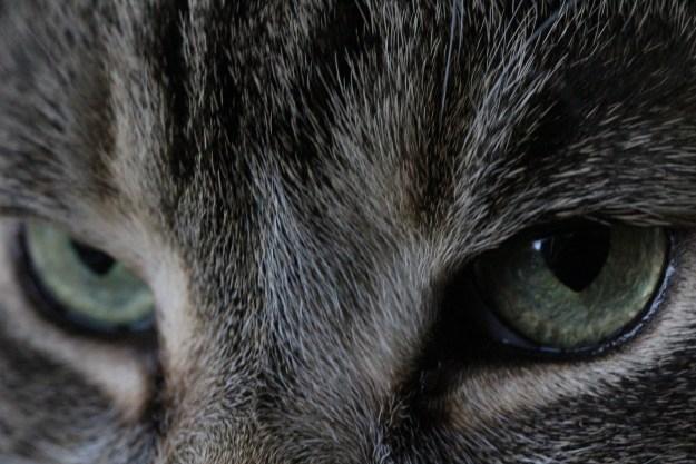 cat-895701_1920