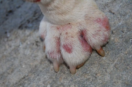 Medium Of How Many Toes Does A Dog Have