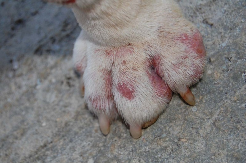 Large Of How Many Toes Does A Dog Have