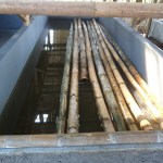 Pengawetan pada Bambu Anti Teter Menggunakan BioCide Insecticide : Pengawetan Pada Bambu Rendam