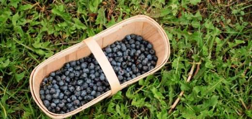 frutas-fazenda-toronto-10