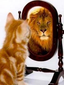 cermin kucing singa
