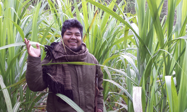 Gustavo with organic sugar cane