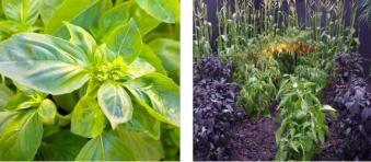 outdoor flower design in dallas