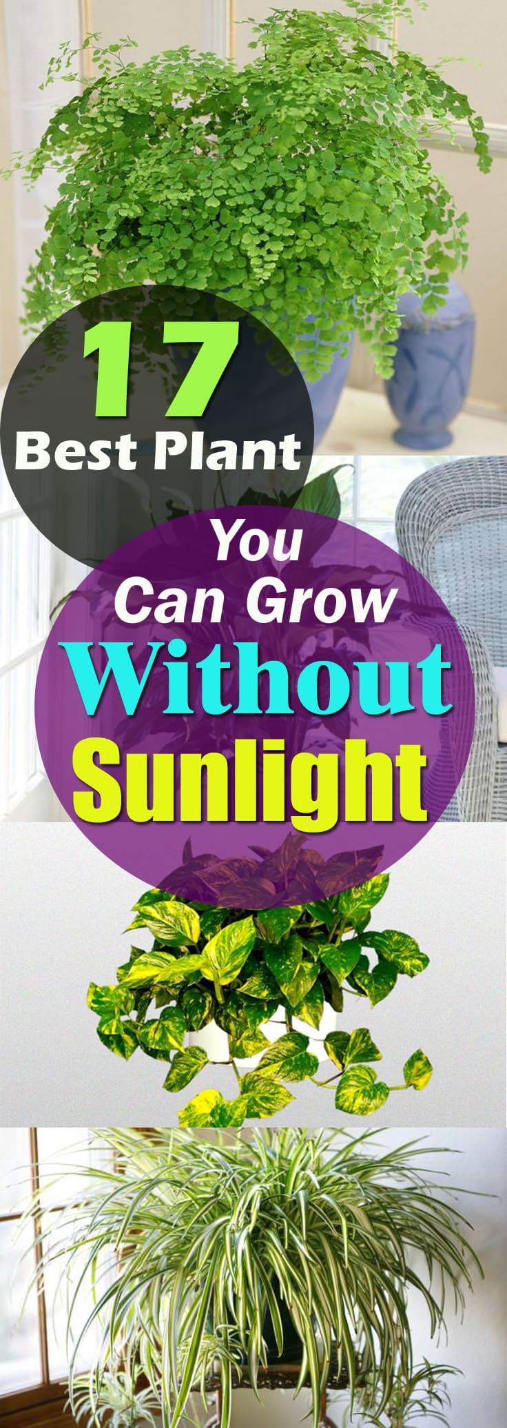 Indoor Plants For Low Light Plants That Grow Without Sunlight 17 Best Plants To Grow Indoors