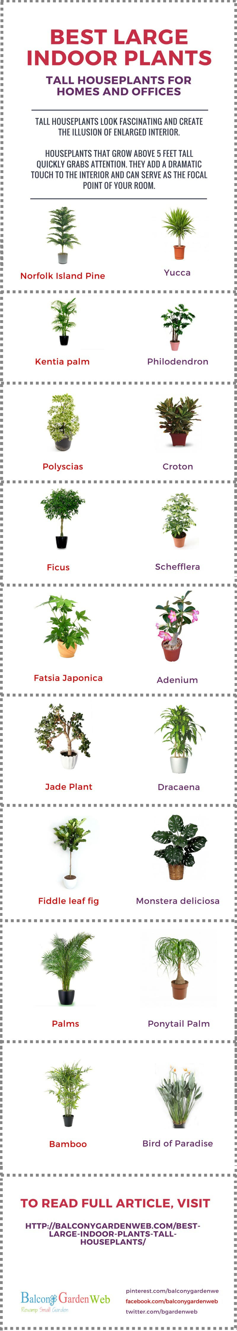 Indoor Plants For The Office 18 Best Large Indoor Plants Tall Houseplants For Home And