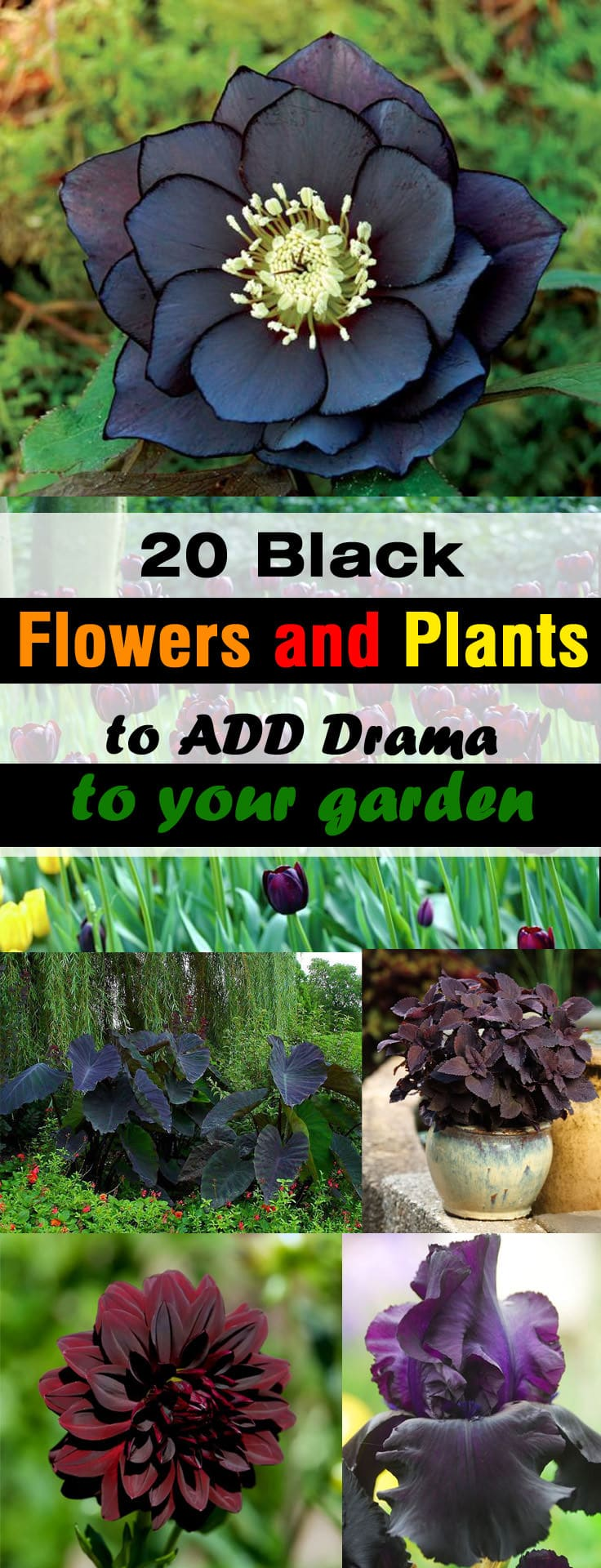 Unique Outdoor Flower Pots 20 Black Flowers And Plants To Add Drama To Your Garden Balcony