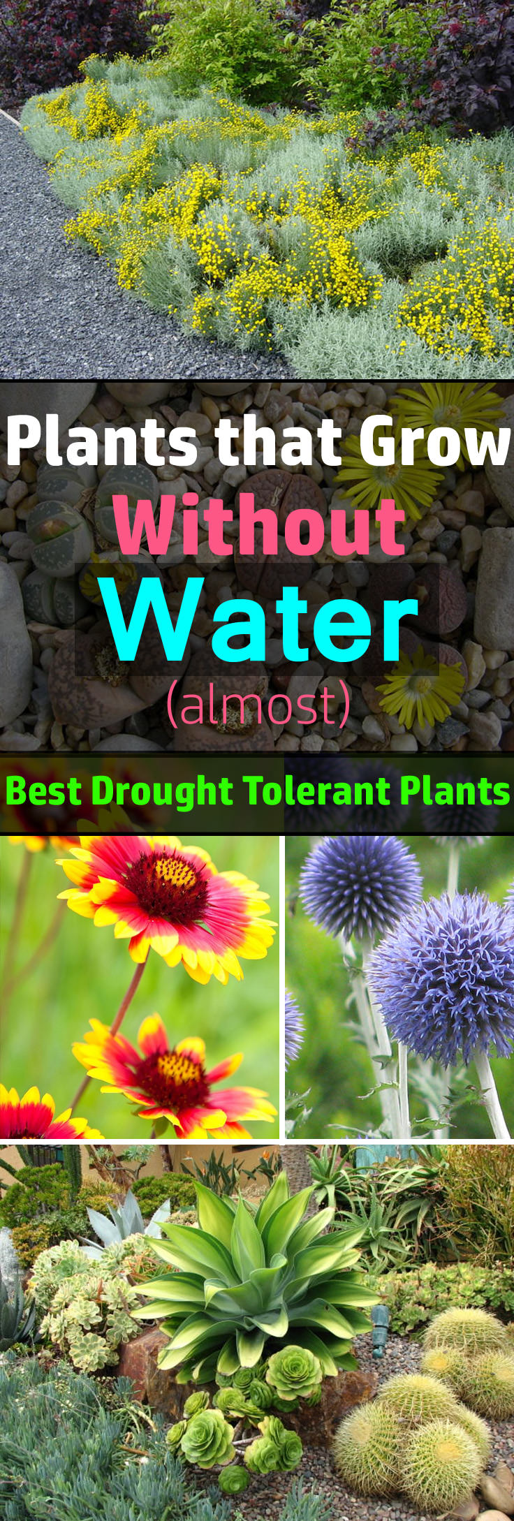 30 Best Drought Tolerant Plants That Grow In Lack Of Water