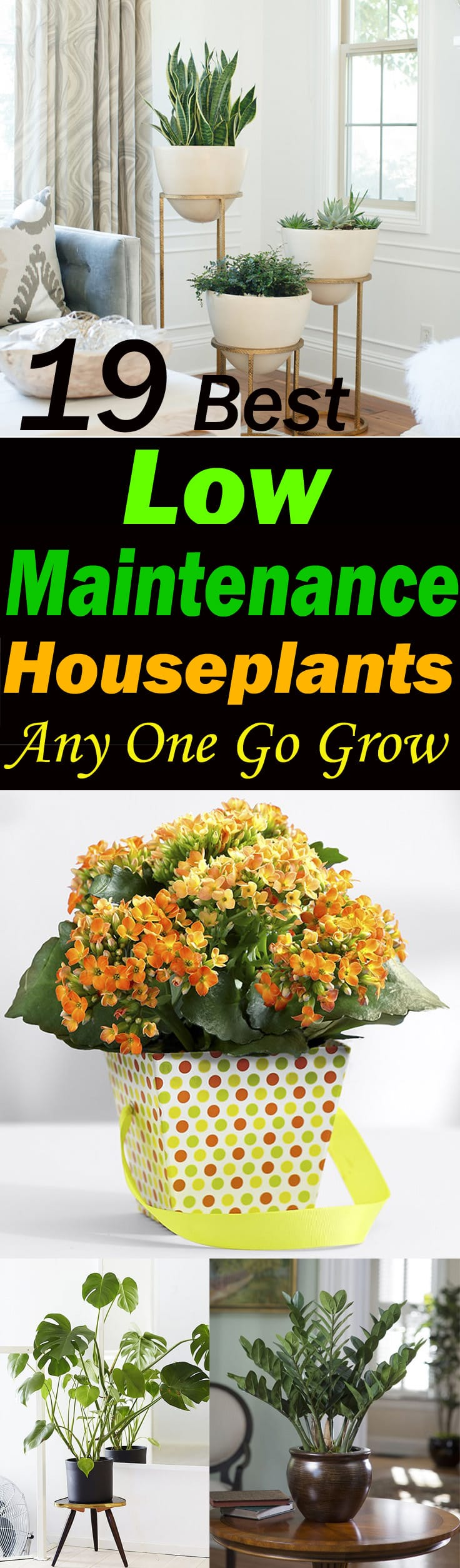 19 Best Low Maintenance Houseplants Balcony Garden Web