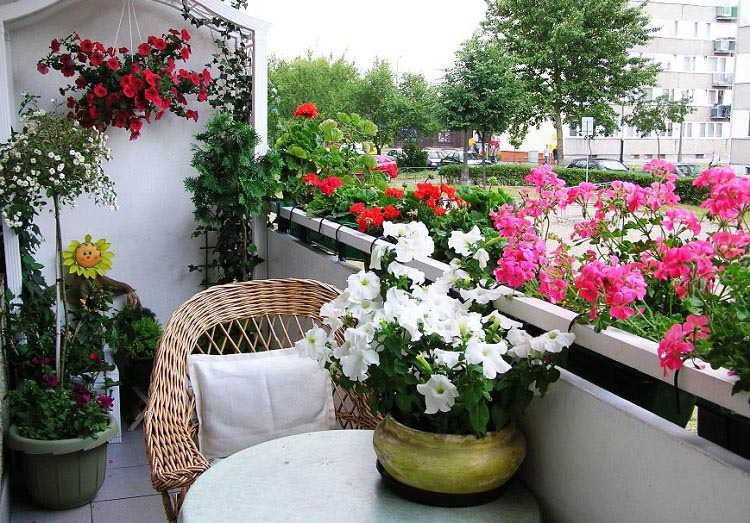 Best Flowers For Balcony Garden