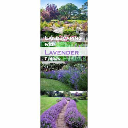 Medium Crop Of Gardening Ideas For Backyard