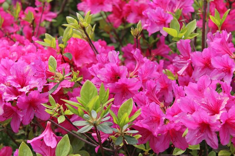 Late Fall Wallpaper Nature Shrubs That Bloom All Year Year Round Shrubs According