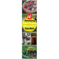 Wondrous Garden Balcony Garden Web Fairy Garden Story Garden Fairy Port Hope Tree Stump Ideeas Garden Tree Stump Ideas