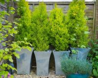 11 Most Essential Container Garden Design Tips | Designing ...
