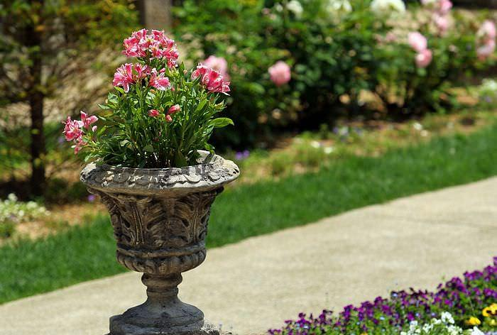 11 Most Essential Container Garden Design Tips Designing a - container garden design ideas