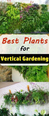 Best Plants For Vertical Garden | Vertical Garden Plants ...