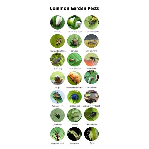 Medium Crop Of Sage Pest Control