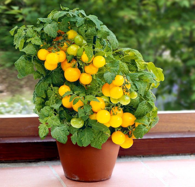 Best Vegetables To Grow In Pots Most Productive