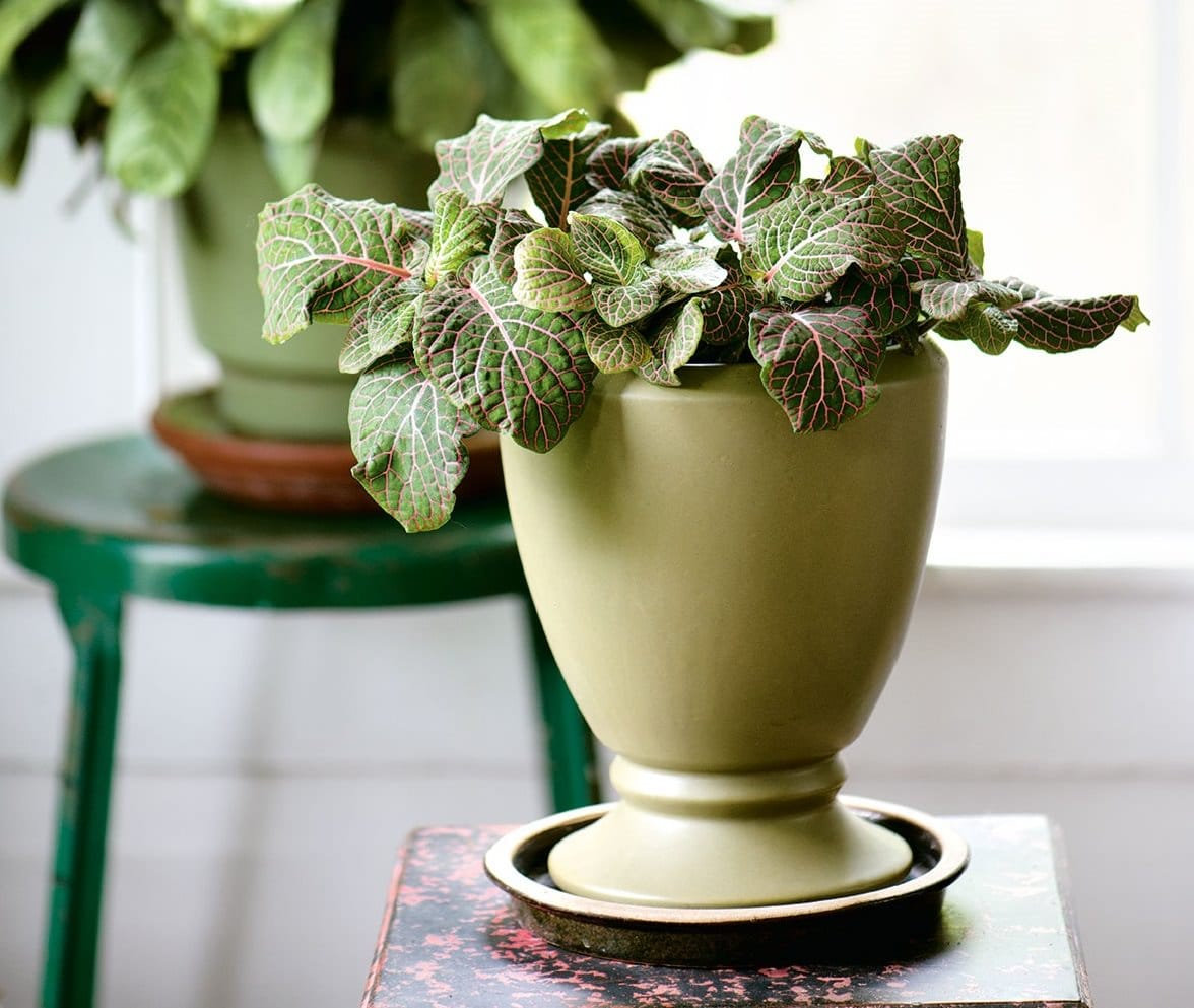 Unusual House Plants For Sale 29 Most Beautiful Houseplants You Never Knew About Balcony