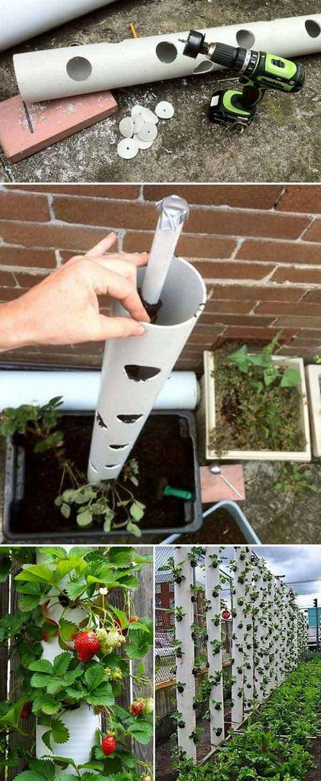 Pleasing Growing Strawberries A Little To No Upright Garden Planters When You Lack An Appropriate Garden Space Or A Vertical Gardeningidea Like This Can Unbeatable Diy Ideas garden Upright Garden Planters