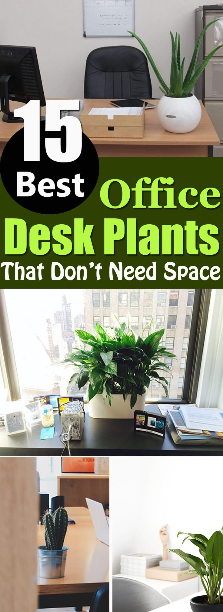 Study Desk For Small Space 15 Best Office Desk Plants That Don't Need Space | Balcony