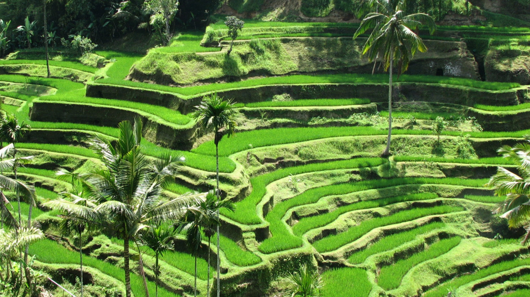 21191640135_9c33863b2d_b Things To Do In Bali