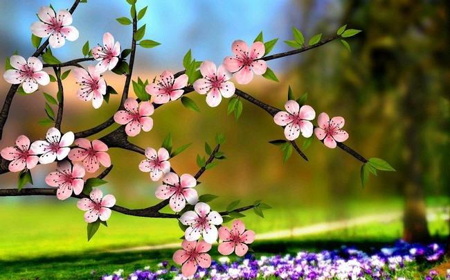 Spring Flowers 3d Live Wallpaper 7 Novih Besplatnih živih Pozadina Balkan Android