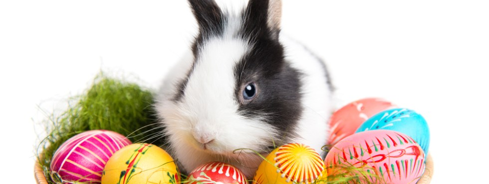 Fun Facts About Easter
