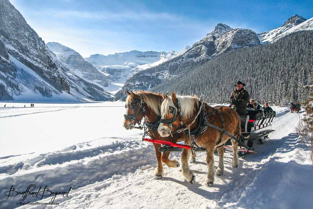 Great Falls Wallpapers Hd Widescreen Horse Drawn Sleigh A Traditional Way To Experience Lake