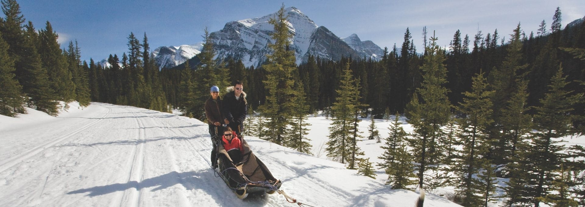 Dogsledding Narnia Tour Discover Banff Tours