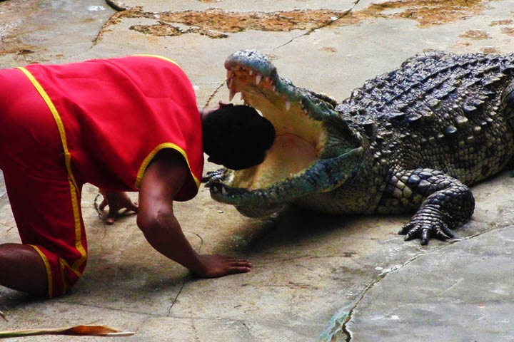 The crocodile show will make you hold your breath