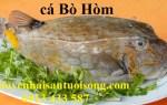 Cá Bò Hòm – nơi bán và giá bao nhiêu tiền 1 kg tại THCM