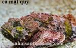 Cá Mặt Quỷ tươi sống giá bao nhiêu tiền 1 kg tại Tp.HCM