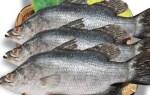 Cung cấp cá chẽm tươi sống – giá bao nhiêu – mua ở đâu tại TpHCM