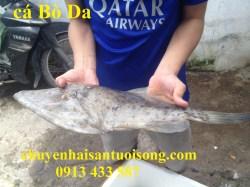 Cá Bò Da tươi – giá mua bán – bao nhiêu 1kg sỉ tại TpHCM