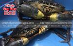 Giá mua bán cua biển Cà Mau sỉ lẻ TpHCM – Hà Nội bao nhiêu 1 kg
